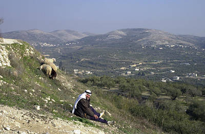 Photograph - The Resting Shepherd by Isam Awad