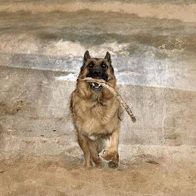 Pets Digital Art - The Retrieve by Angie Tirado