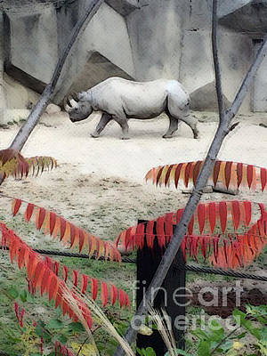 Photograph - The Rhino Walk by Karen Adams