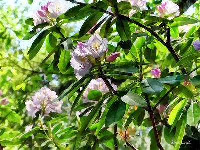 Photograph - The Rhododendrons Are In Bloom by Susan Savad