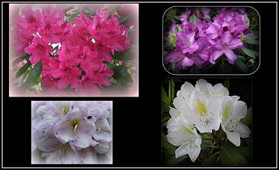 Photograph - The Rhododendrons Of Spring - A Collage by Dora Sofia Caputo Photographic Design and Fine Art