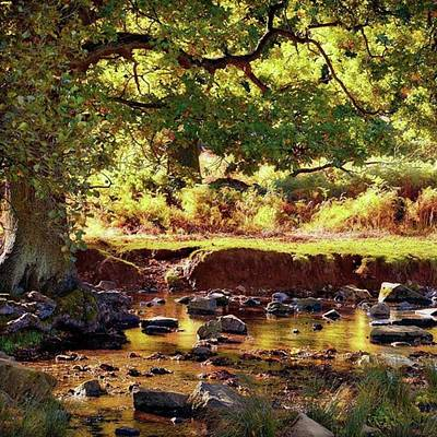 Sunset Wall Art - Photograph - The River Lin , Bradgate Park by John Edwards