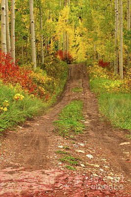 Photograph - The Road Leading Into The Fall Trees by Ronda Kimbrow