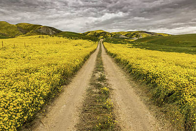 Fiddleneck Photograph - The Road Less Pollenated by Peter Tellone