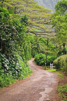 The Road Less Traveled-waipio Valley Hawaii Art Print