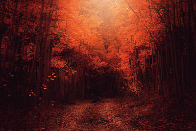 Photograph - The Road Less Traveled by Erica Kinsella