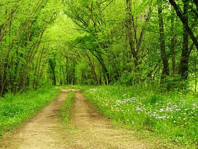 Photograph - The Road Less Traveled  by Lori Frisch