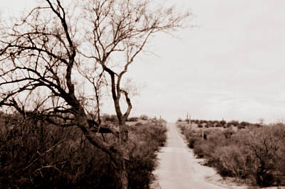 Photograph - The Road Less Traveled by Nature Macabre Photography