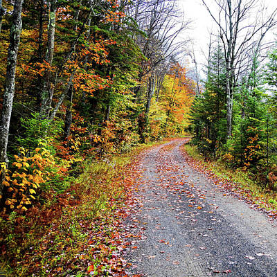 Photograph - The Road To Autumn by David Patterson