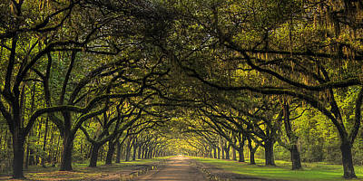 Photograph - The Road To Wormsloe by Ken Smith