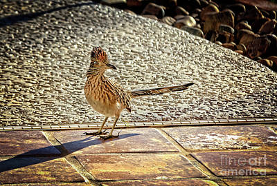 Family Crest Photograph - The Roadrunner by Robert Bales
