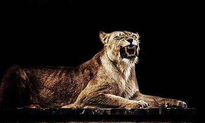 Roar Photograph - The Roar by Martin Newman