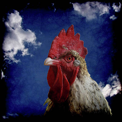 Rooster Photograph - The Rooster by Ernie Echols