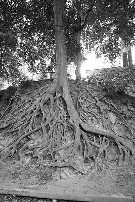 Photograph - The Root Of It All by Joseph C Hinson Photography
