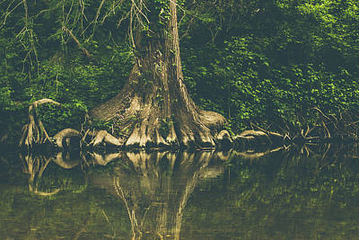 Photograph - The Roots by Amber Dopita