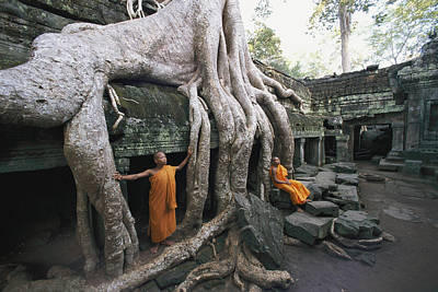 Tree Roots Photograph - The Roots Of A Strangler Fig Creep by Paul Chesley