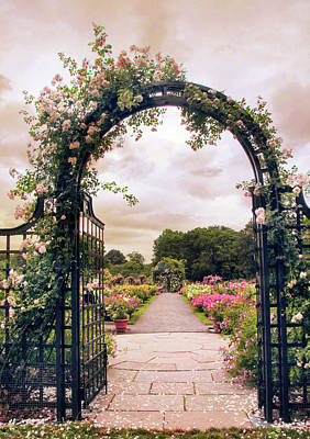 Photograph - The Rose Allee by Jessica Jenney