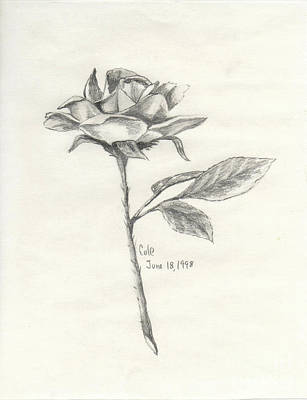 Drawing - The Rose by Larry Cole