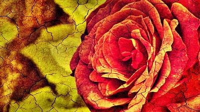 Digital Art - The Rose by Pedro Venancio