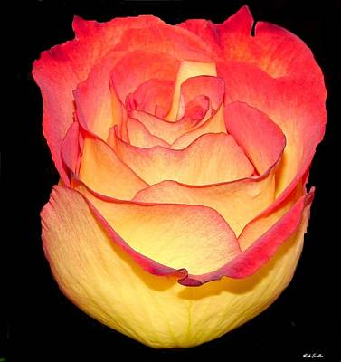 The Rose Art Print by Rick Friedle