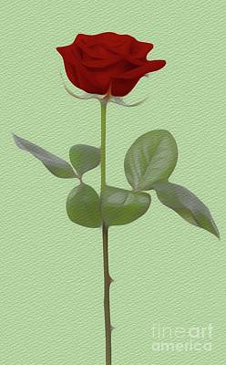 Floral Royalty-Free and Rights-Managed Images - The Rose by Sarah Kirk