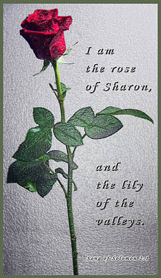 Photograph - The Rose - Scripture by Terry Wallace
