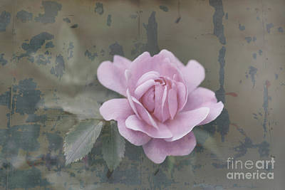 Digital Art - The Rose Wash by Donna L Munro