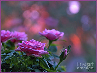 Photograph - The Roses by Lance Sheridan-Peel