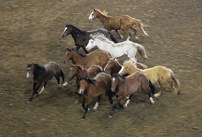 Photograph - The Roundup by Phyllis Britton