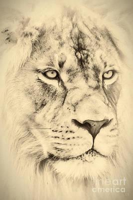 Lion Painting - The Ruler Large Canvas Art, Canvas Print, Large Art, Large Wall Decor, Home Decor, Photograph by David Millenheft