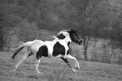 Horse Photograph - The Run by Emily Stauring