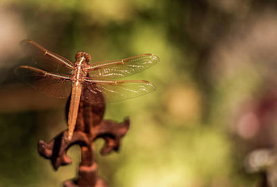 Photograph - The Rusty Dragonfly by Wendy Carrington