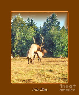 Photograph - The Rut Poster by Ansel Price