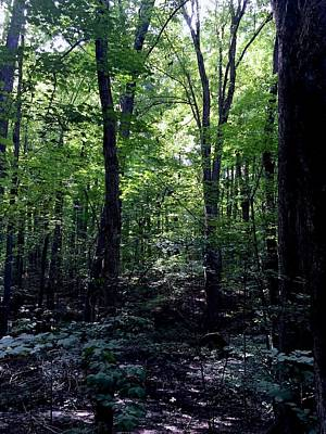 Photograph - The Sacred Grove by Eric Tressler