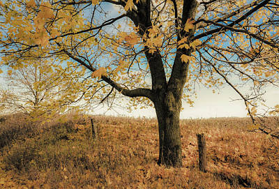Photograph - The Sad Maple Tree by Karl Anderson