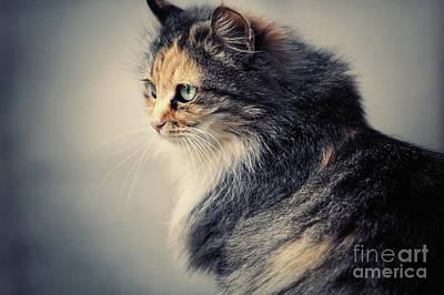 Photograph - The Sad Street Cat by Dimitar Hristov