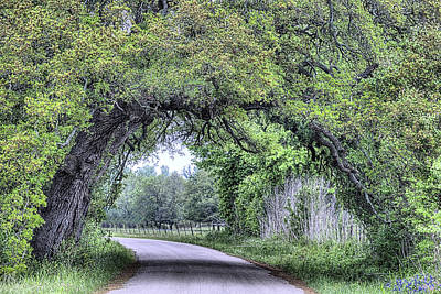 Photograph - The Sam Houston Oak Arch by JC Findley