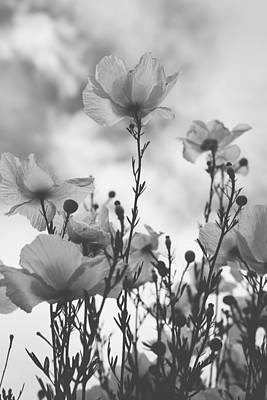 White Flowers Photograph - The Same Air You Breathe by Laurie Search