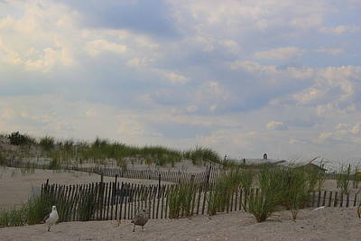 Photograph - The Sand Dunes At Point Lookout, New York by Dora Sofia Caputo Photographic Design and Fine Art