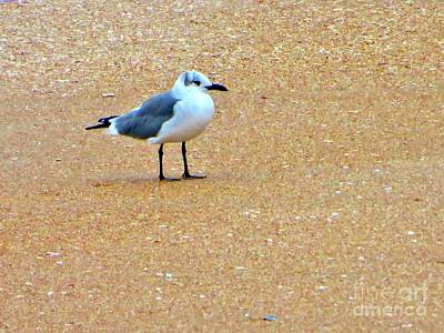 Photograph - The Sanderling A Florida Shore Bird by Tim Townsend