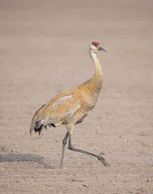 Photograph - The Sandhill Crane Walk by Loree Johnson