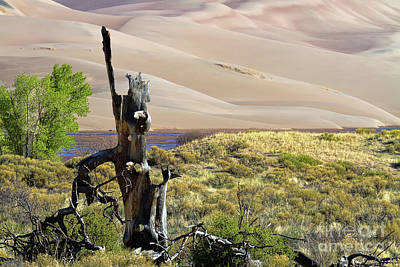 Photograph - The Sands Of Time by Jim Garrison