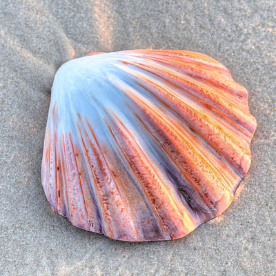 Photograph - The Scallop  by JC Findley