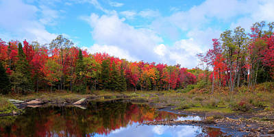 The Scarlet Reds Of Autumn Print by David Patterson
