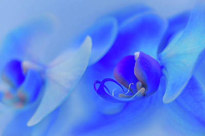 The Scent Of Blue Mystique Art Print