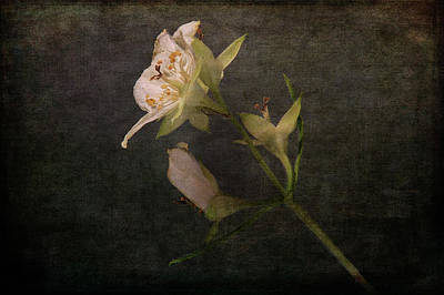 Photograph - The Scent Of Jasmines by Randi Grace Nilsberg