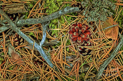 Lichen Photograph - The Scent Of Pine Forest II by Veikko Suikkanen