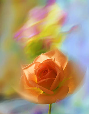 Photograph - The Scent Of Roses by Vladimir Kholostykh