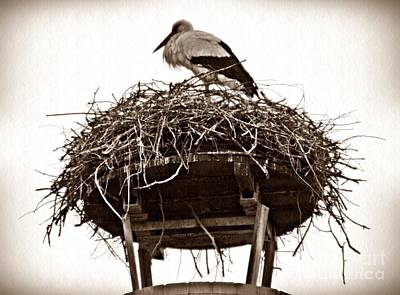 Stork Photograph - The Schierstein Stork Sepia by Sarah Loft