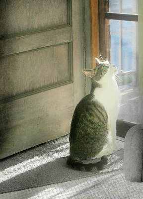 The Screen Door Cat Art Print